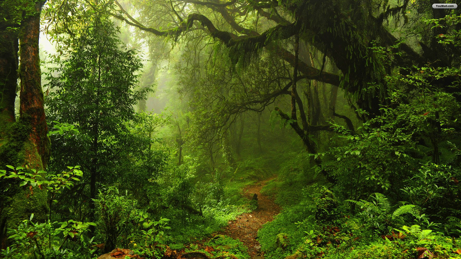 Related image of forest ISFC